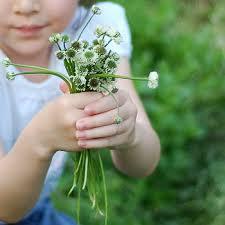 Image courtesy: greenearthchoice.com