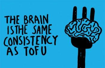 tofu-brain